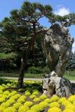 Japanischer Baum Stockfoto