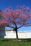 Japanischer Cherry Blossom Tree Vertical lizenzfreie stockfotos