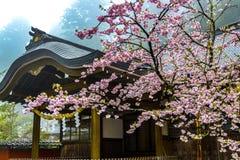 Japanischer Cherry Blossoms im Nebel lizenzfreies stockfoto