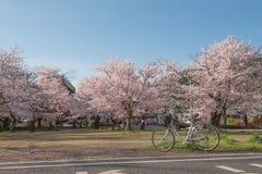 Japanischer Frühling szenisch mit Kirschblüte, Arashiyama, Kyoto Lizenzfreie Stockbilder