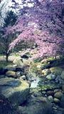 Japanischer Garten Obrazy Royalty Free