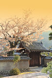 Japanischer Garten in Arashiyama, Kyoto, Japan Lizenzfreie Stockfotos