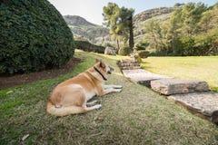 Japanischer Garten an den Kibbuzim Hephzibah Stockbild