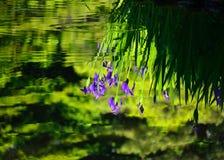 Japanischer Garten im Frühjahr, blühende Iris Kyoto Japan Lizenzfreies Stockfoto