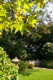 Japanischer Garten mit japanischem Ahornholz Stockbilder