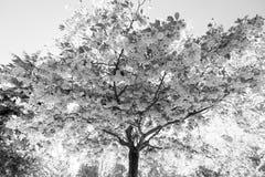 Japanischer Kirschbaum mit Blumen Stockfotografie