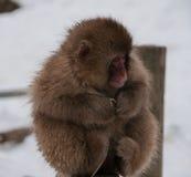 Japanischer Makaken auf einem Beitrag in Japan Stockfoto