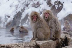 Japanischer Makaken, der in heiße Quellen badet, Stockfotos