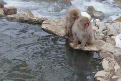 Japanischer Makaken, der in heiße Quellen badet, Lizenzfreie Stockfotos