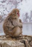Japanischer Makaken, der in heiße Quellen badet, Lizenzfreies Stockfoto