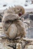 Japanischer Makaken, der in heiße Quellen badet Lizenzfreies Stockfoto