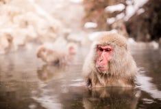 Japanischer Makaken in der heißen Quelle lizenzfreies stockfoto
