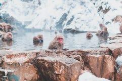 Japanischer Makaken, der in der heißen Quelle stillsteht lizenzfreie stockbilder