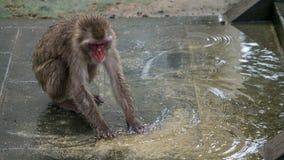Japanischer Makaken, der im Wasser spielt Stockfotografie