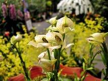 Japanischer Orchidee-Garten stockbilder
