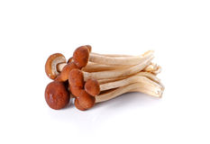 Japanischer Pilz auf weißem Hintergrund Stockbild