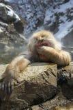 Japanischer Schnee-Affe Lizenzfreies Stockbild