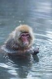Japanischer Schnee-Affe im wilden Stockfotos