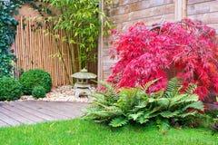Japanischer Steinlaternen- und Rotahornbaum Stockbild