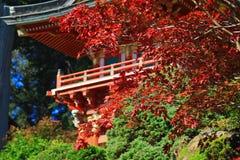 Japanischer Tee-Garten in San Francisco Lizenzfreies Stockfoto