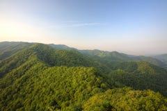Japanischer Wald Stockbild