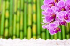 Japanischer ZEN-Garten mit feng shui stockfotos