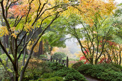 Japanisches Ahornholz-Baum-Kabinendach durch die Brücke stockfoto