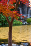 Japanisches Ahornholz und Wasserfall Lizenzfreies Stockbild
