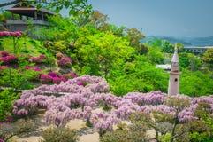 Japanisches Glyziniefestival während der Frühlingszeit Stockfoto