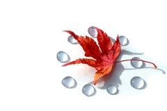 Japanisches Herbstblatt und die Tropfen des Weiß Lizenzfreie Stockfotos