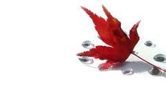 Japanisches Herbstblatt und die Tropfen des weißen #2 Lizenzfreie Stockfotos