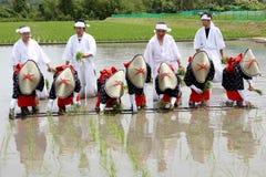 Japanisches junges Mädchen, das Reis pflanzt Stockbilder