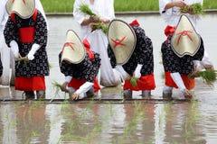 Japanisches junges Mädchen, das Reis pflanzt Lizenzfreies Stockbild