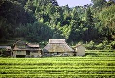 Japanisches Land Stockbild