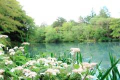 Japanisches Landschaftsdesign Stockbild