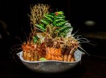 Japanisches Meeresfrüchtefestival Stockfotografie