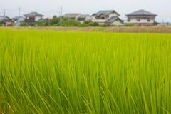 Japanisches Reisfeld stockbild