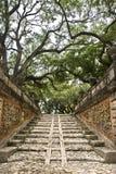 Japanisches Tempel-Treppenhaus Stockfotografie