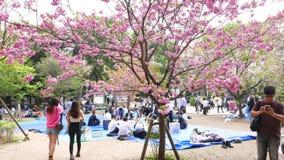 Japanner bij de bloesemfestival van de hanamikers, heldere roze bloemen op sakuraboom stock video