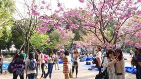 Japanner maakt beelden en selfie roze sakurabloemen, kersenbomen in bloesem stock footage