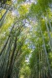 Japans bamboebos, Arashiyama Royalty-vrije Stock Foto