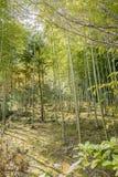 Japans bamboebos, Arashiyama Royalty-vrije Stock Afbeeldingen