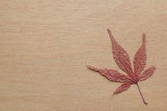 Japans esdoornblad en houten achtergrond Royalty-vrije Stock Afbeeldingen