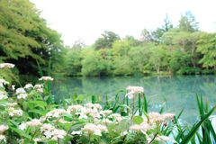 Japans landschapsontwerp Stock Afbeelding