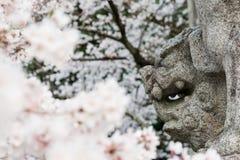 Japans Lion Dog met Cherry Blossoms Stock Foto