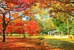Japans park in de herfst in Tokyo, Japan stock afbeeldingen