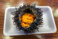Japans Voedsel: Verse zeeëgel (uni) van de lokale markt in J royalty-vrije stock afbeeldingen