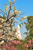 Japanse abrikoos stock foto