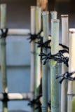 Japanse bamboeomheining Stock Fotografie
