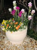 Japanse bloemen royalty-vrije stock foto's